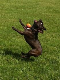 dog catching  ball meme guy