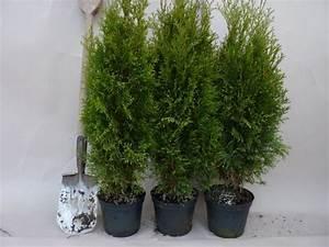Thuja Smaragd Pflanzabstand : heckenpflanzen kaufen thuja smaragd lebensbaum smaragd ~ Michelbontemps.com Haus und Dekorationen