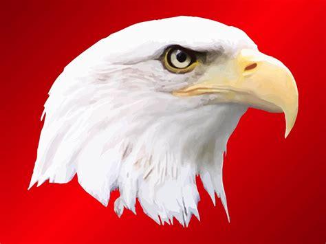 American Bald Eagle Svg – 248+ File SVG PNG DXF EPS Free