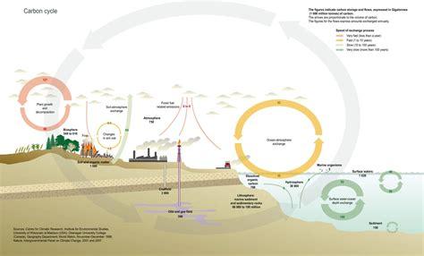 Carbon Cycle Fsc Geography Fieldwork