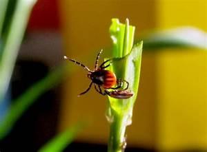 Garten Schädlinge Bekämpfen : zecken bek mpfen tipps gegen die blutsauger im garten ~ Michelbontemps.com Haus und Dekorationen