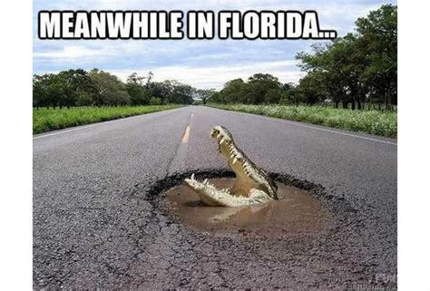 Florida Rain Meme - florida rain meme 100 images gallery our favorite ta flooding memes tbo com 45 very funny