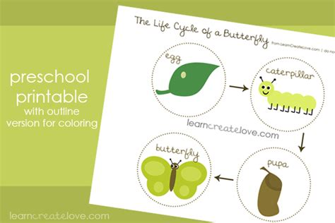 butterfly life cycle for preschool free montessori biology printables for children 723