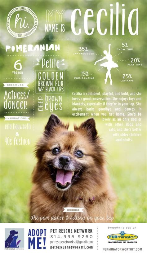 Charity Action For Animal Shelter Poster Templates by 14 Best Images About Dog Adoption Rescue Posters On