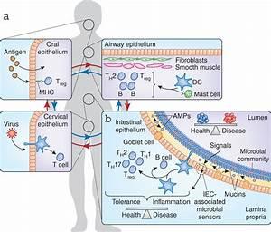 Mucous Membranes Part Deux