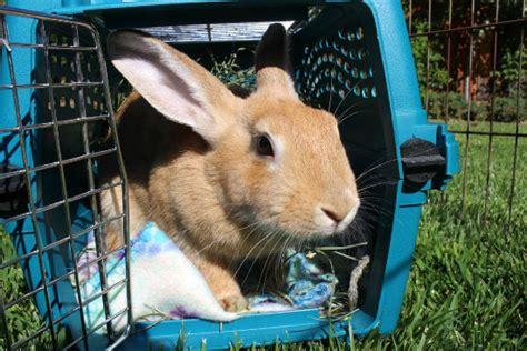 traveling   rabbit wabbitwiki