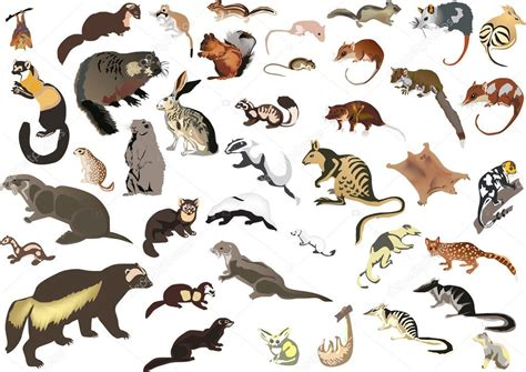 large collection  small animals stock vector  drpas