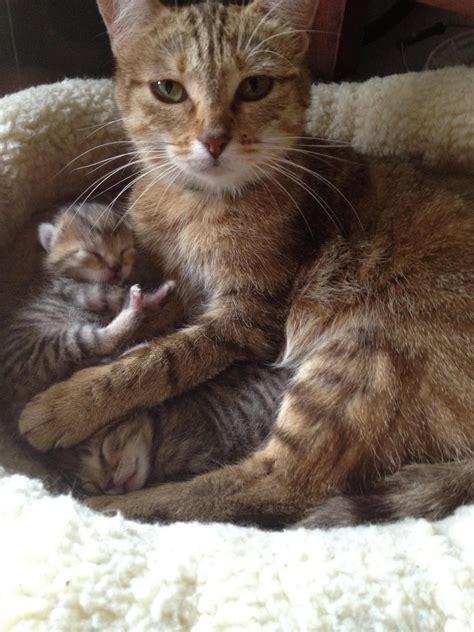 kittens cats cute reddit animals