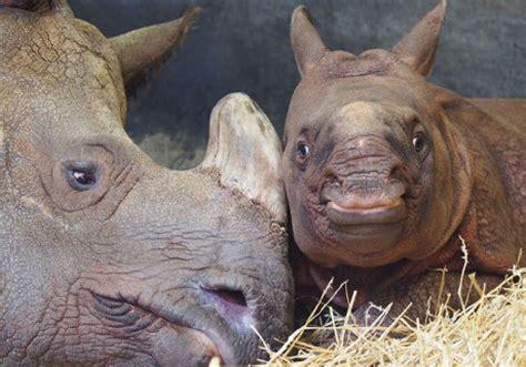 rhino its asks naming zoo toronto help mom