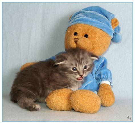 was braucht zum tapezieren jeder braucht einen baer zum kuscheln foto bild tiere haustiere katzen bilder auf