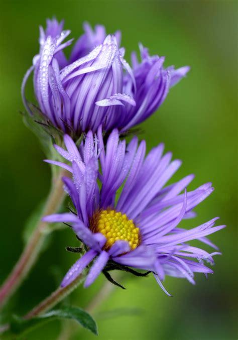 macro flower contest win  tamron mm macro lens mike