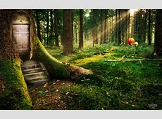 Enchanted Forest Wallpapers HD Wallpapers ID #11925