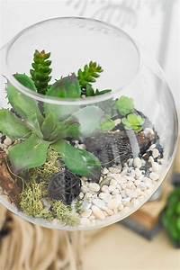 Sukkulenten Im Glas : diy sukkulenten im dekoglas decor home homedecor ~ Watch28wear.com Haus und Dekorationen