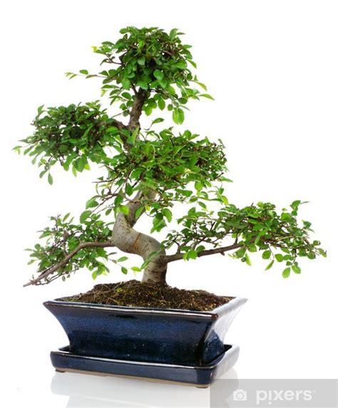 Ikea Bonsai Baum by Fototapete Bonza 239 Mini Ficus Dans Un Pot Bleu En Fa 239 Ence