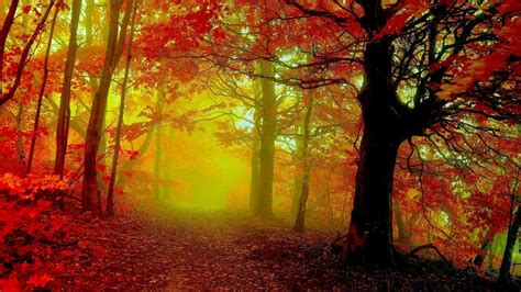 Autumn Themed Wallpapers For Android by Fall Themed Backgrounds Wallpaper Cave