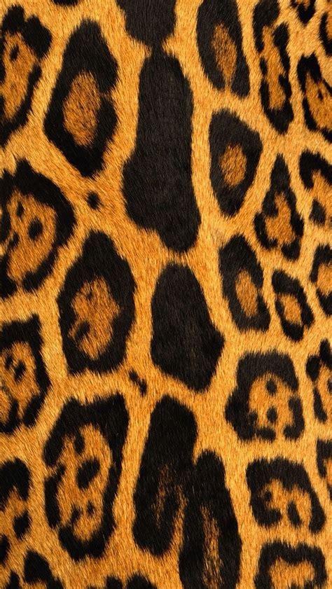 leopard wallpaper phone wallpapersafari
