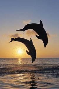 Schöne Delfin Bilder : 1001 ideen zum thema sch ne delfine bilder lifestyle pinterest delfine bilder ~ Frokenaadalensverden.com Haus und Dekorationen