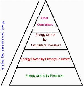 How many trophic levels are included in the energy pyramid ...