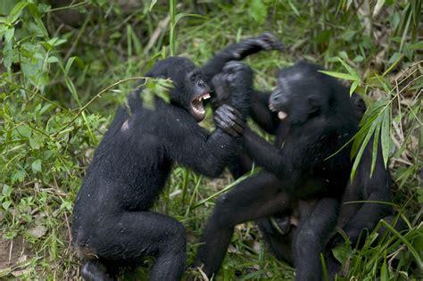 human violence stacks    killer animals