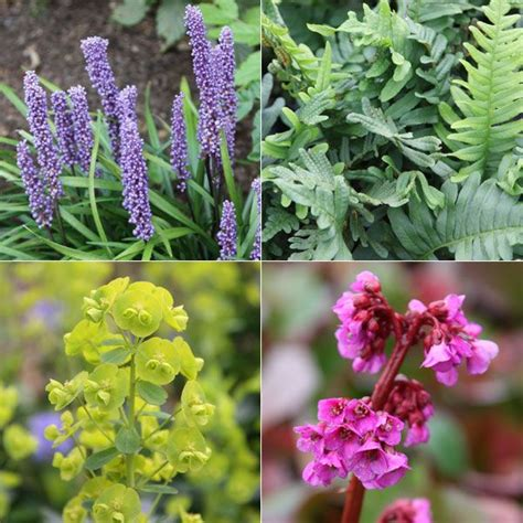 shade loving perennials uk 34 best images about woodland ground cover on pinterest gardens sun and shade plants