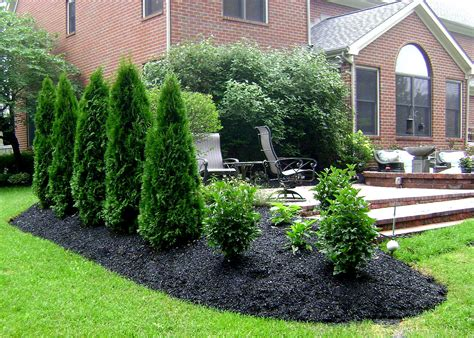 landscape for privacy privacy planting