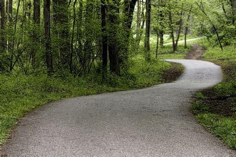 pictures of pathways path through the forest by darkphoenix36 on deviantart