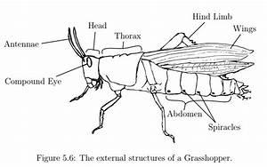 Investigation Of Phylum Arthropoda