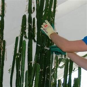 Wie Oft Muss Man Einen Kaktus Gießen : uhlig kakteen ihr spezialist f r kakteen und andere sukkulente pflanzen ~ Orissabook.com Haus und Dekorationen