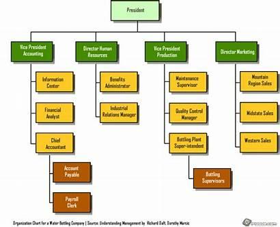 Organizational Chart Structure Company Types Bottling Organization