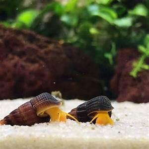 Rabbit Snails Complete Care Guide