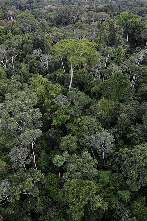 amazon canap save amazon rainforest canopy animals and plants