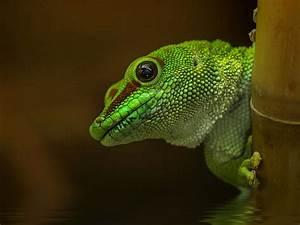 Detlef Knapp Snaps Portraits of Reptiles and Amphibians ...