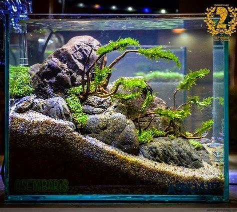 How To Aquascape A Freshwater Aquarium by Aquaticscenery Instagram Aquarium Fish Tank