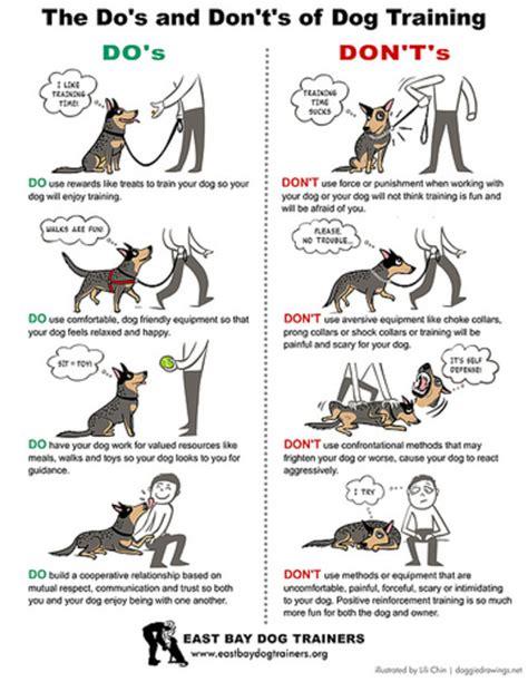 hoe de hond te trainen dos  dontscartoon honden