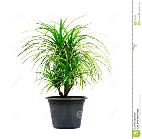 Green House Plant Isolated On White Stock Photo Image