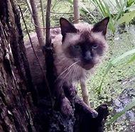 Cat Rescues Man in a Swamp