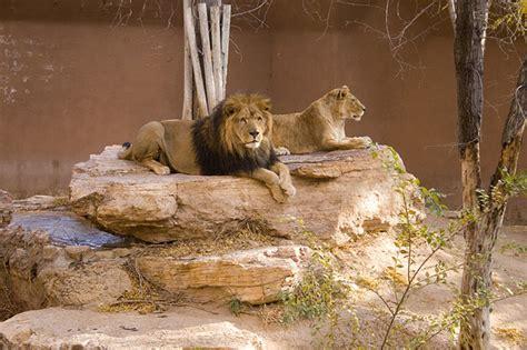 zoo albuquerque rio grande animals adorable budget travel lions must vacation zoos