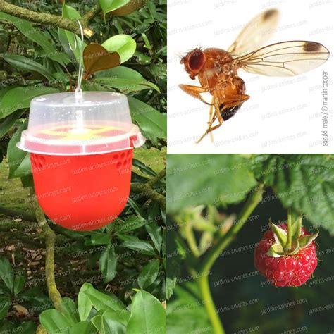produit contre les moucherons cuisine anti moucheron maison se dbarrasser des mouches avec