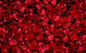 Red Rose Flower Backgrounds - Wallpaper Cave
