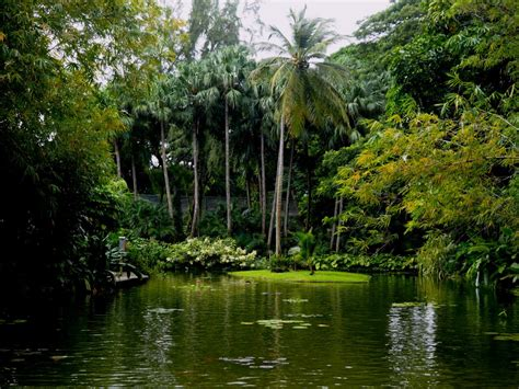 un jardin botanique en guadeloupe