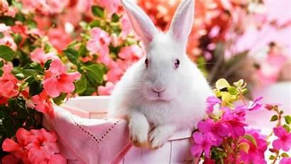 Rabbit Wallpapers Resolution