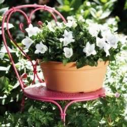 plantes exterieur toutes saisons plante senecio