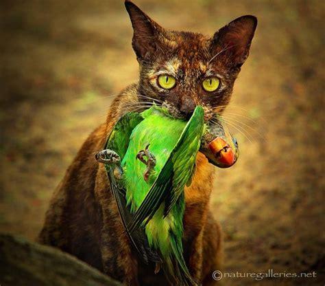 12096 professional photographs of animals wildlife photography by sompob sasi smit