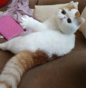 Cutest Cat Ever Snoopy