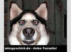 lustiges hunde gesicht FunPic