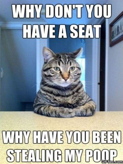 Lolcat Meme - all country wallpapers funny pictures blog