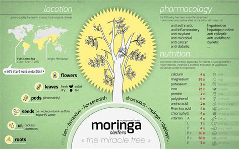 Increase Breast Milk Supply With Moringa An Amazing