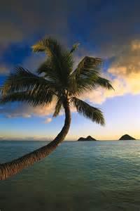 Hawaii Palm Trees Sunrise