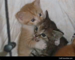 Cat Hugging Kitten