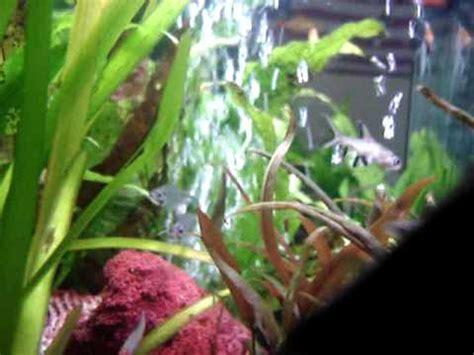 aquarium poisson d eau douce